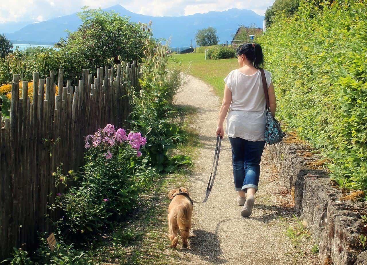 dog walking side hustle